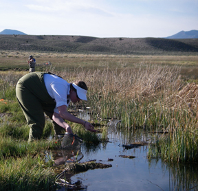 Nevada Springs Ecological Evaluation